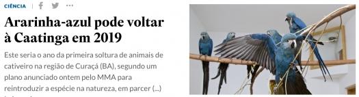 Ararinha-azul pode voltar à Caatinga em 2019