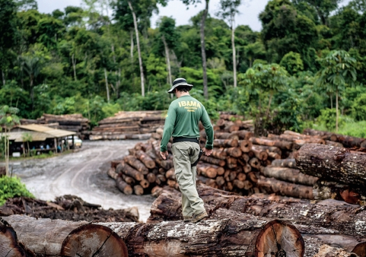Deforestation spikes in Brazil as oversight ebbs
