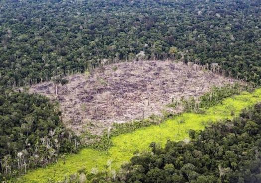 Governo federal quer observação privada da Amazônia