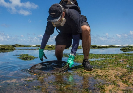 Mysterious oil spill threatens marine biodiversity haven in Brazil