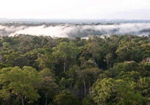 Biodiversidade vale mais que soja e carne na Amazônia
