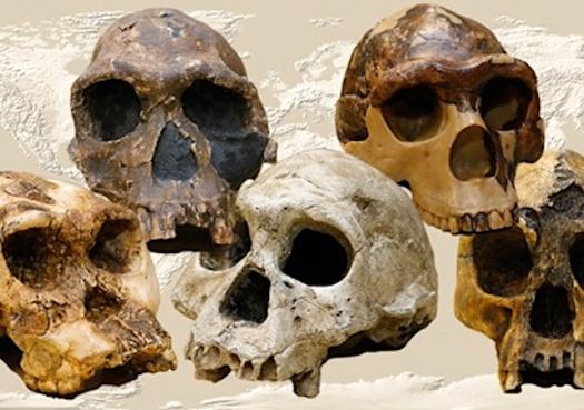 Cientistas brasileiros reescrevem a história do gênero humano