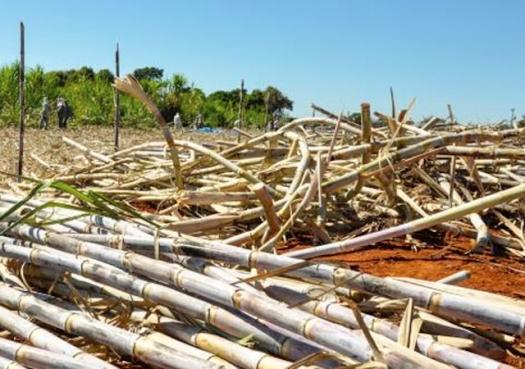 Liberação da cana na Amazônia é desnecessária e perigosa, alerta professor da USP
