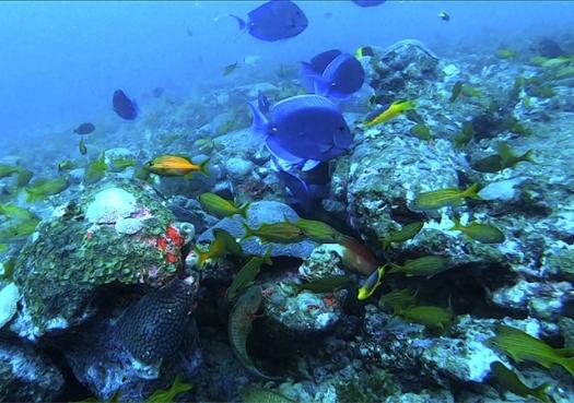 Cientistas descobrem novos ecossistemas recifais na costa da Bahia