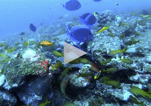 Expedição Royal Charlotte: A descoberta de um novo ambiente recifal no sul da Bahia