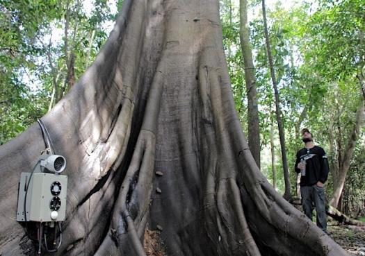 Pesquisadores criam Big Brother para monitorar fauna da Amazônia