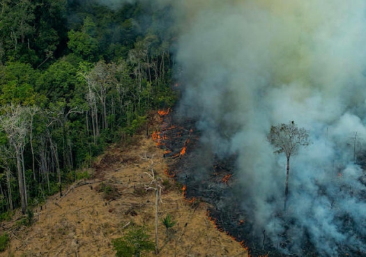Pesquisadores temem explosão de desmatamento em 2020