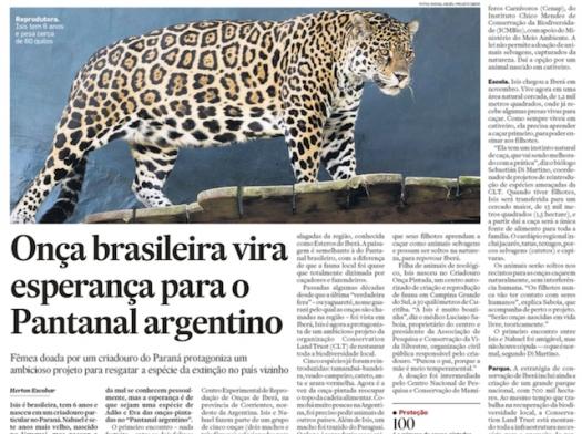 Onça brasileira vira esperança para o Pantanal argentino