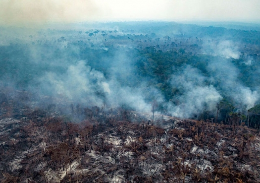 Brazil deforestation is exploding; and 2020 will be worse