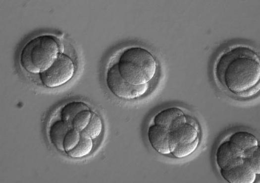 Cientistas editam genoma de embrião humano para evitar doença hereditária