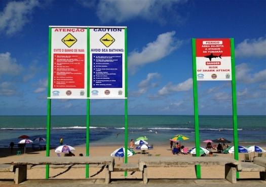 Reportagem Especial: Ataques de tubarão no Recife