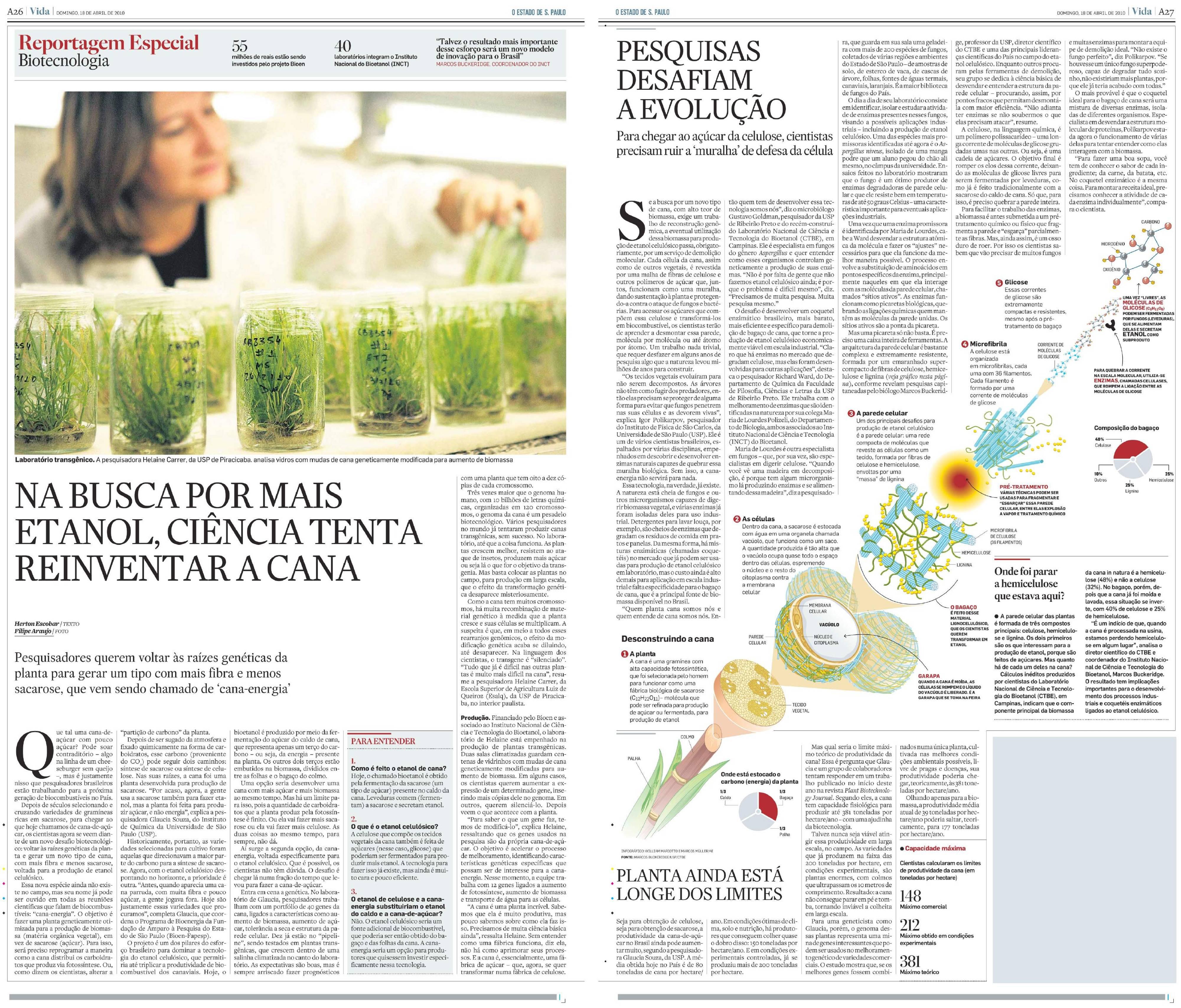 Na busca por mais etanol, ciência tenta reinventar a cana