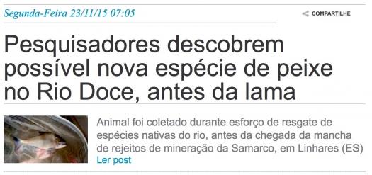 Pesquisadores descobrem possível nova espécie de peixe no Rio Doce