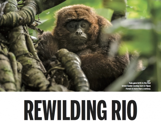 Rewilding Rio: Ecologists recreate a living forest in the heart of the Olympic city