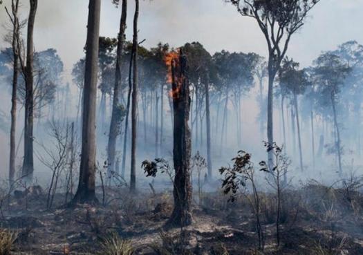 O jogo agora é outro: Nova política climática dos EUA aumenta pressão sobre o Brasil