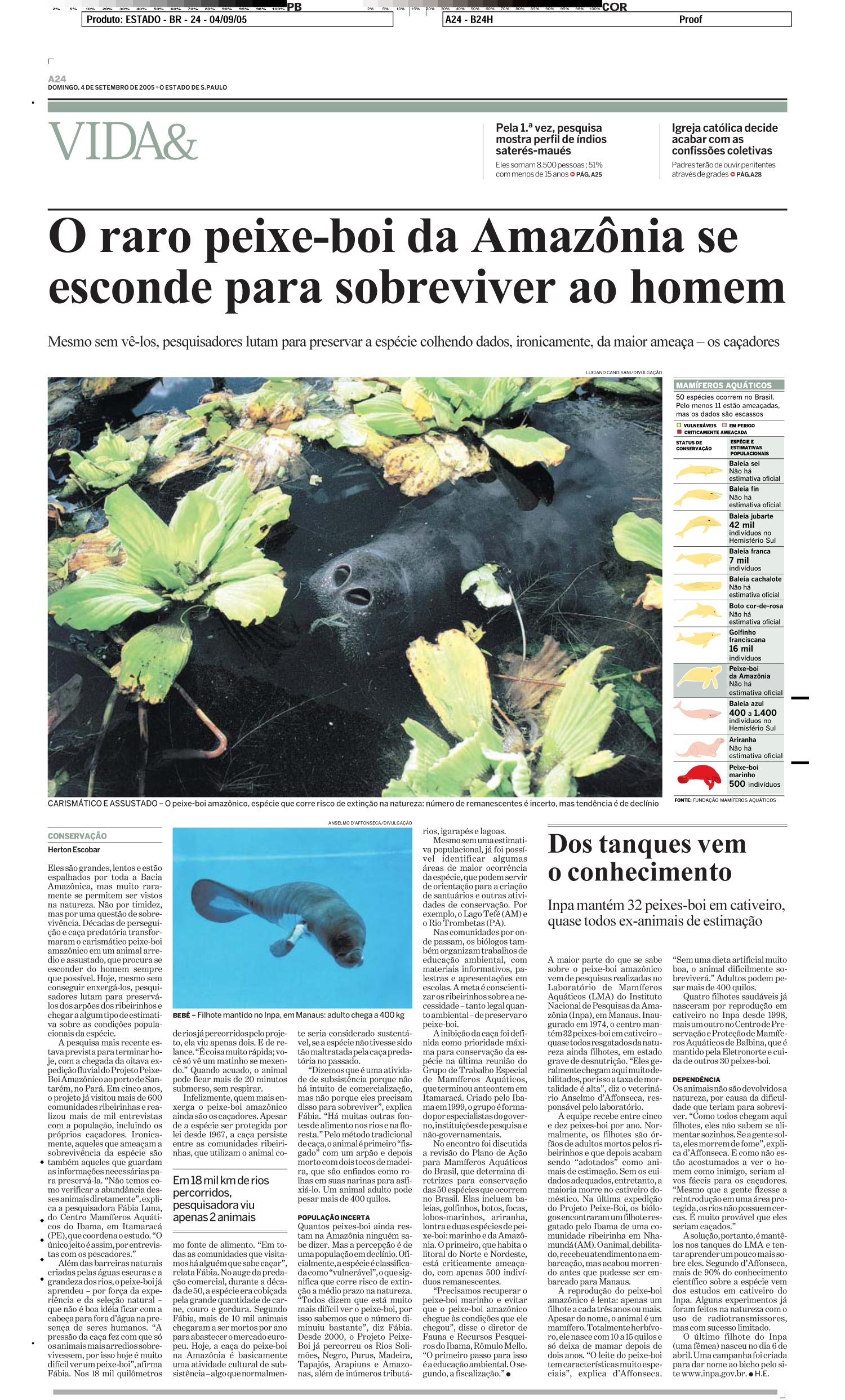 O raro peixe-boi da Amazônia se esconde para sobreviver ao homem