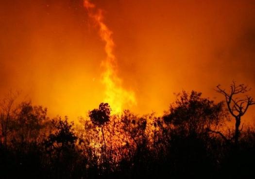 Cientistas pedem proteção imediata ao Cerrado