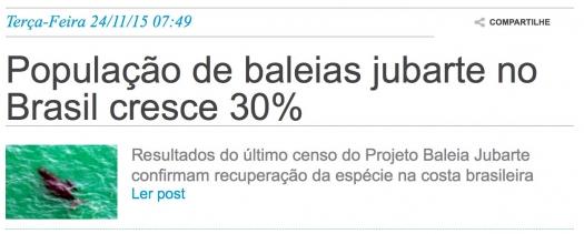 População de baleias jubarte no Brasil cresce 30%