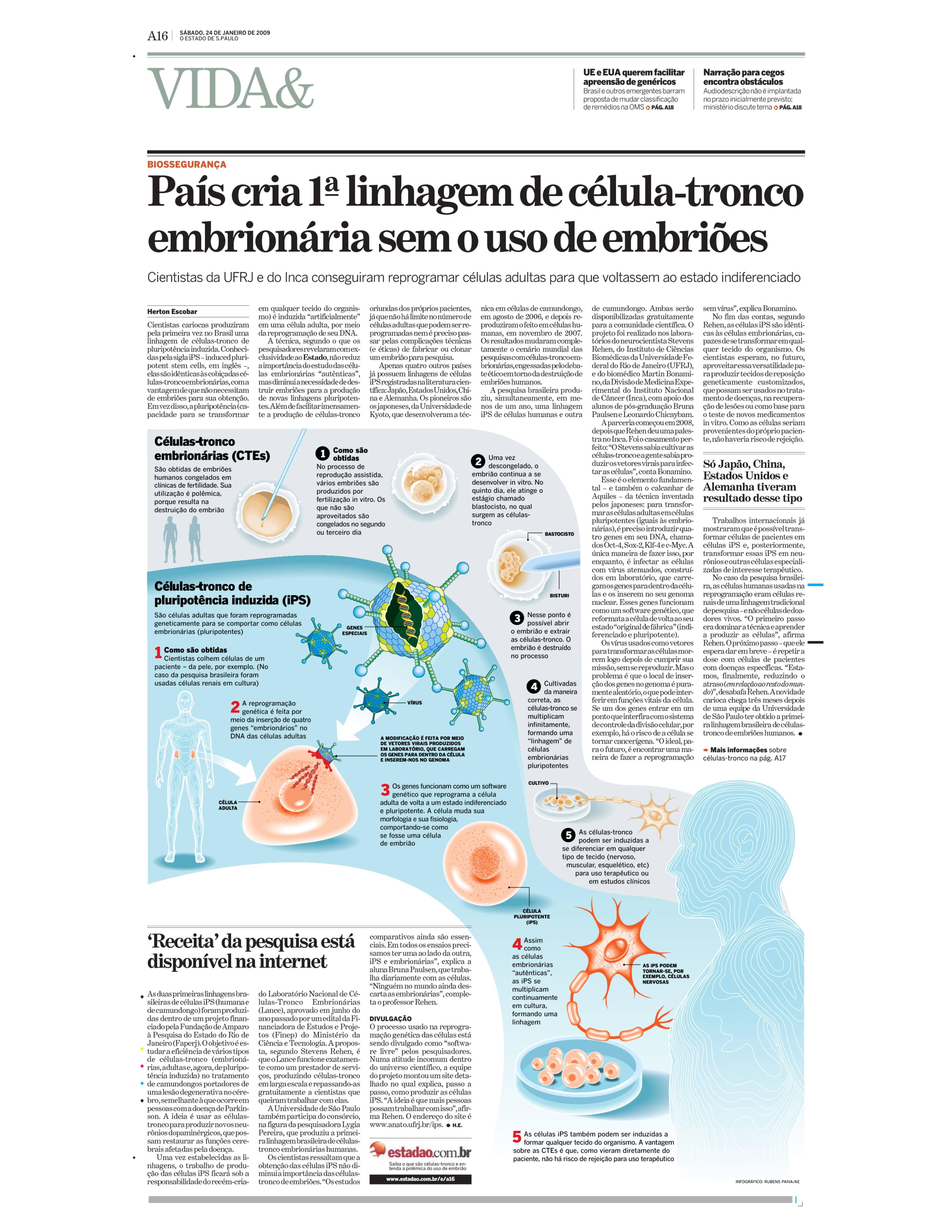 Brasil produz primeira linhagem de células embrionárias sem embrião