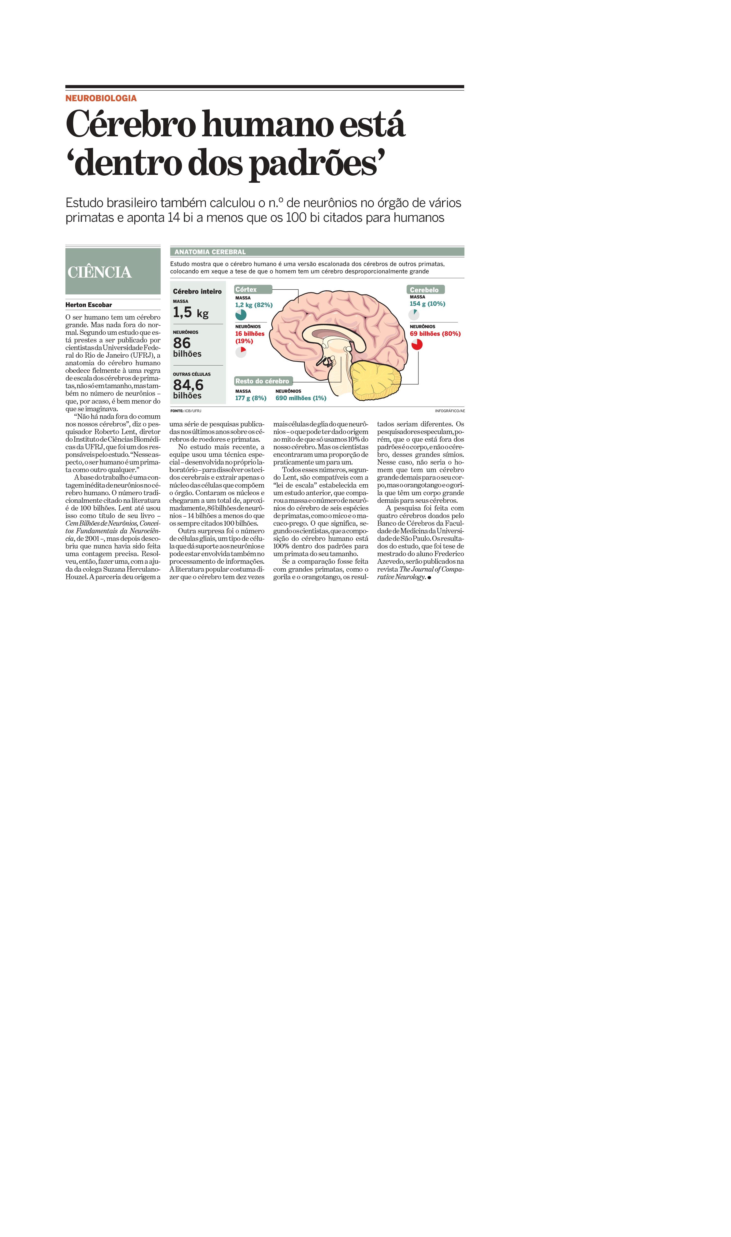 Cérebro humano está