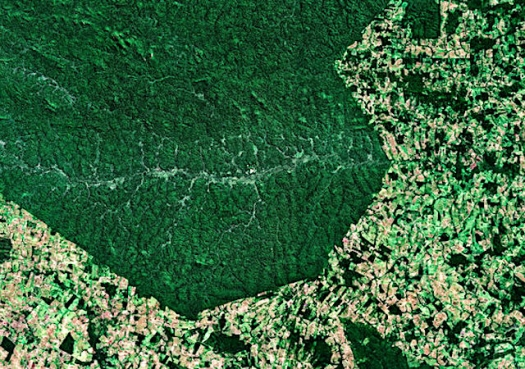 Deforestation in the Amazon is shooting up, but Brazil?s president calls the data a lie