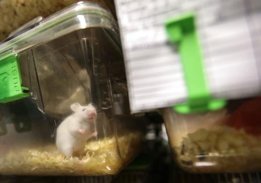 Governador veta lei que proibiria uso de animais no ensino em São Paulo