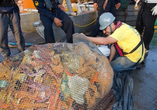Cientistas descobrem recifes ocultos na foz do Rio Amazonas