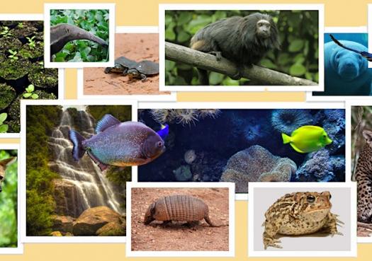 Brasil desperdiça o potencial de sua biodiversidade, um ativo único e inigualável