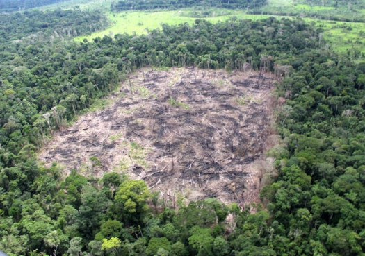 MMA alega que monitoramento falho é responsável por alta de desmatamento