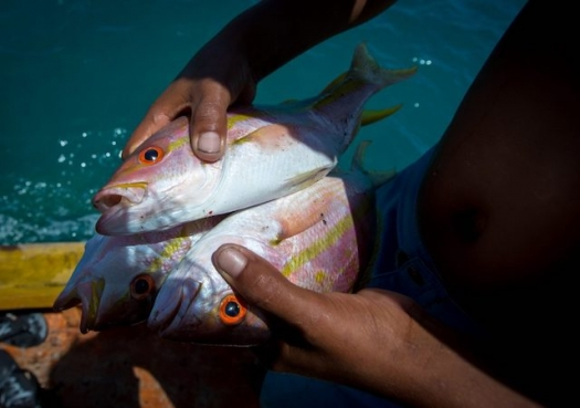 Cientistas criticam novo regramento para pesca de espécies ameaçadas de extinção