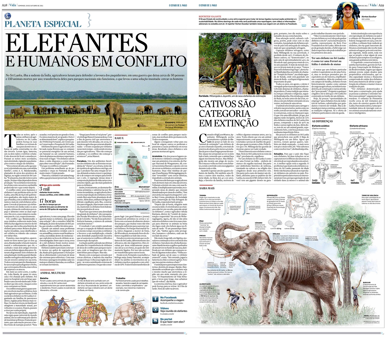 Repórter Viajante: Elefantes e humanos em conflito no Sri Lanka