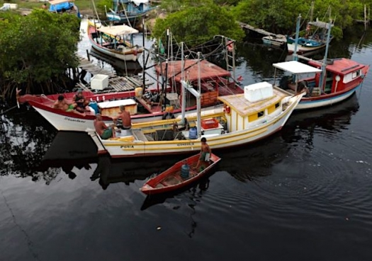 Ministérios buscam soluções para pesca de espécies ameaçadas