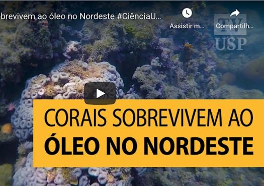 Corais sobrevivem ao óleo no Nordeste
