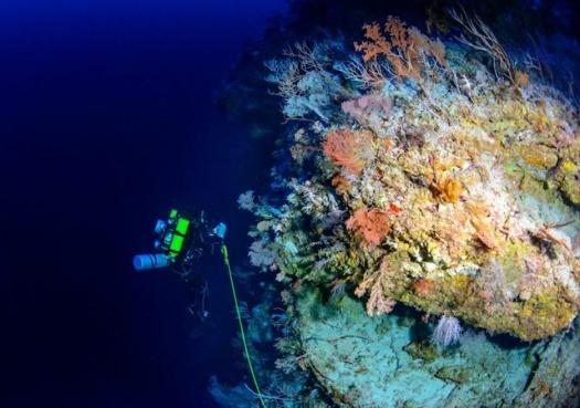 Recifes profundos são biologicamente distintos e estão igualmente ameaçados