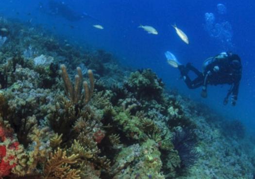 Óleo no Nordeste: Ao menos os corais sobreviveram