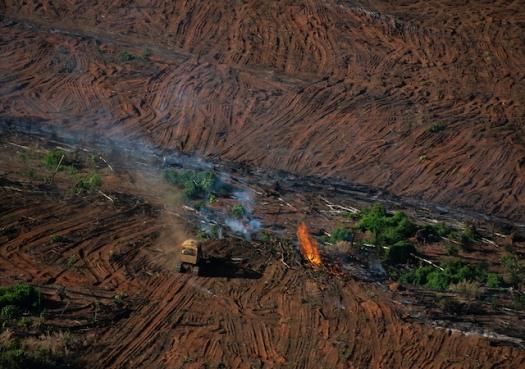 Desmatamento na Amazônia dispara de novo em 2020