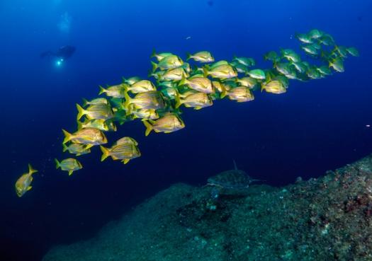 Um novo mapa para a conservação marinha no Brasil