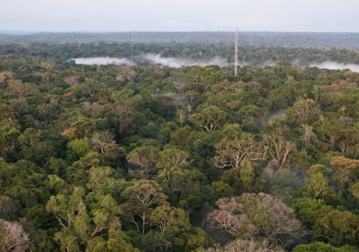 Mistura tóxica pode destruir a Amazônia, alerta pesquisador